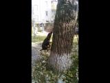 ягдтерьер Патрон и дерево 2