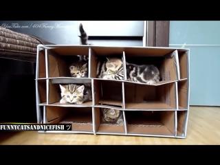 Котята Смешные коты и кошки Приколы с котами и кошками