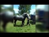 Конь весом в тонну