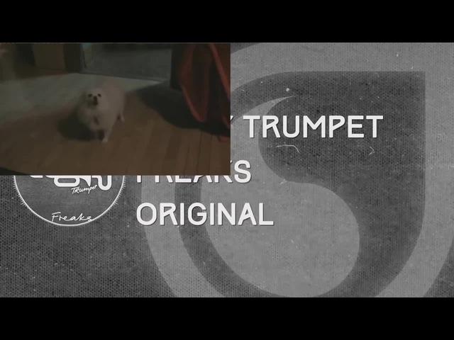 GABE THE DOG - gabe the dog Timmy Trumpet