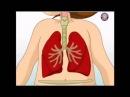 Строение тела человека. Анатомия для детей! Что у нас внутри!