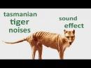 The Animal Sounds: Tasmanian Tiger Noises - Sound Effect - Animation