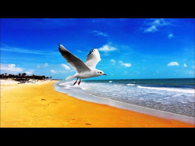 Океан Шум волн Пение птиц Шум моря