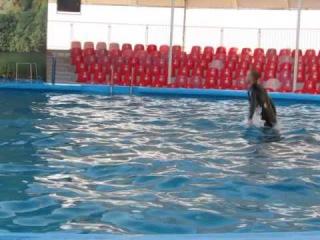 Дельфинарий Крым! Феодосия! танец человека и дельфинов! Очень красиво
