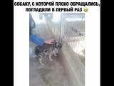Приют для животных. Маленькую собаку, с которой очень плохо обращались прежние хозяева, женщина, гладит первый раз.