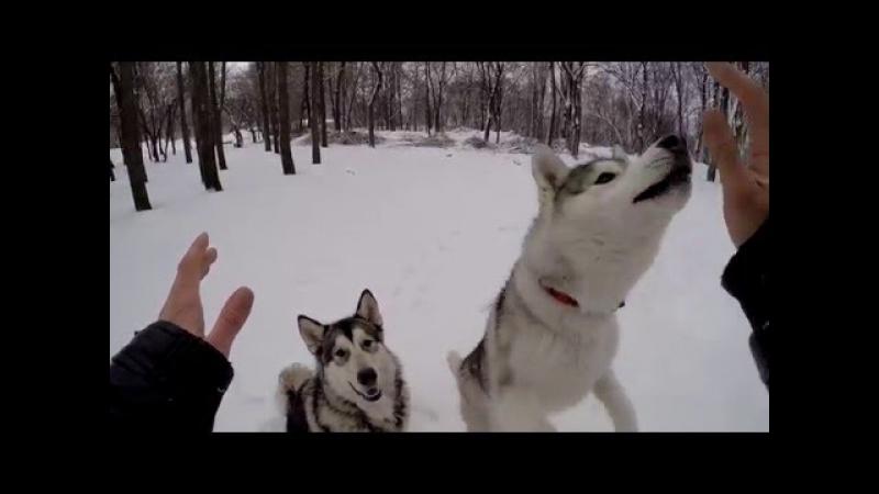 Самые умные собаки в мире / The cleverest dogs in the world