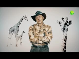 Живая Планета отвечает: Как рожают жирафы?