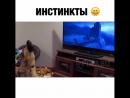 Пёс смотрит Зверополис Пикабу