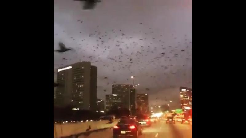 Dies geschah in Houston Texas am 19 Januar 2017 apokalyptischen Bilder aus einem Horrorfilm Freunden gezogen scheinen Sie ni