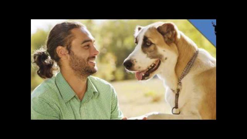 Почему мужчины предпочитают завести собаку а не жену