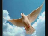 marty robbins, la paloma
