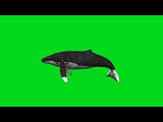 Baleia #1 - Whale #1 [Fundo Verde - Green Screen]