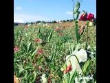 Instagram video by Sasha Zvereva My Mother's Day was full of flowers