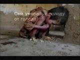 Kрасивое видео заставят вам плакать