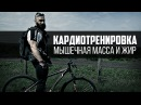 Кардиотренировка, сжигание жира и мышечная масса. Велосипед - выбор Бородача.