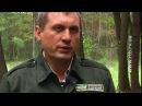 Помста лісівникам невідомі підпалили машину місце відпочинку і ліс ВІДЕО