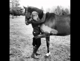 Что есть общее в лошадях и любви. А вот фотки, когда это сливается)