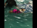 бассейн собачек учат плавать