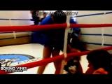 K.O  BoxingVines  by Nales