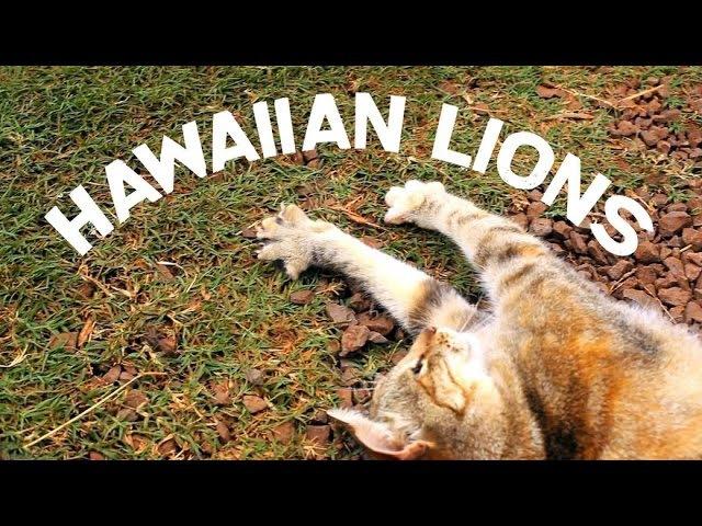 Hawaiian Lions - Lanai Cat Sanctuary, Lanai, Hawaii