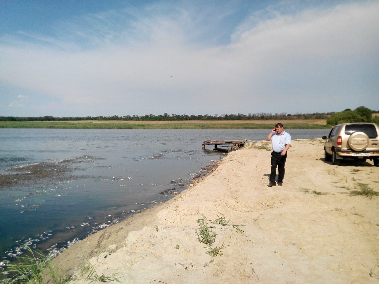 Ветеринарные врачи установили причину массового мора рыбы в реке Кадамовке