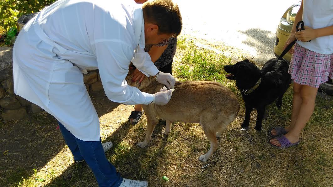 Ветврачи Таганрога за неделю выездных вакцинаций привили от бешенства 1182 животных