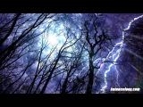 Forest Rain &amp Thunderstorm Sounds 10 Hours Sleep or Study to Rain Falling White Noise Ambiance