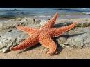 Интересные факты Морские звезды