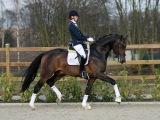 Dressage Horses For Sale - Ultimate Equine