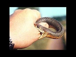 Начертание антихриста - Укус змея(зеркало)