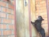 open the door #coub, #коуб