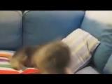 как чихают разные животные )