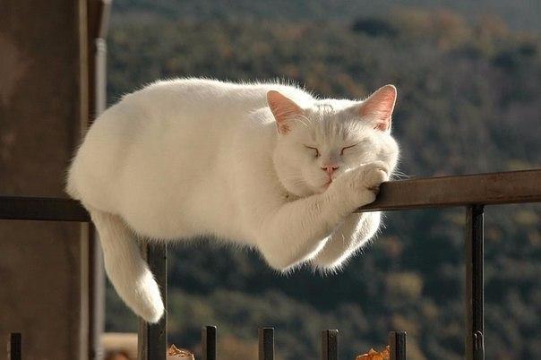 Уснуть любой ценой
