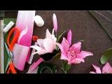 How to make lily paper flower - Hướng dẫn làm hoa ly