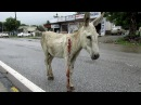 Wounded and bleeding donkey stranded on highway rescued ЗООЗАЩИТНИКИ