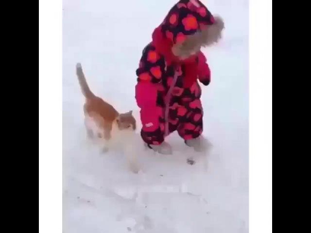 Кот-борцуха!)
