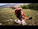 Шавкат тест упражнение ниндзя ifdrfn ntcn eghfytybt ybylpz