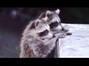 Clever and Witty Animals! Video Digest