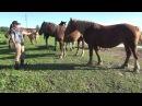 Почему мы не обучаем лошадей за пищевое поощрение вкусняшки