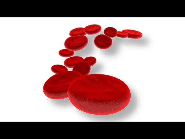 7.1 Кровеносная система - кровь (8 класс) - биология, подготовка к ЕГЭ и ОГЭ 2017