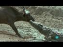 Grandes documentales - El fracaso en la caza El juego de cazar