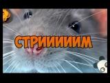 ПАТОК ПАШЕЛ! twitch.tvnotactic1337