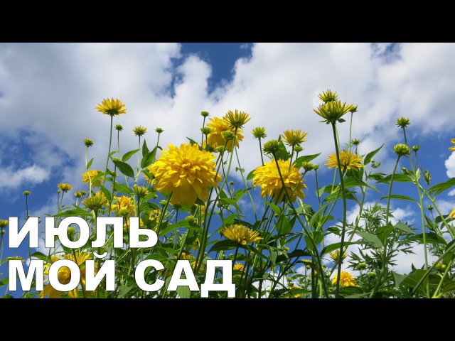 Алёнин сад в ИЮЛЕ 2016 Alena's garden in July 2016 Allotment diary