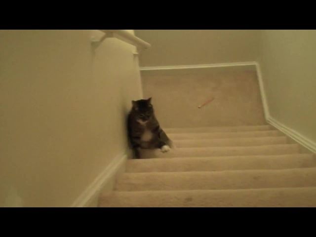 Кот надрался · coub, коуб