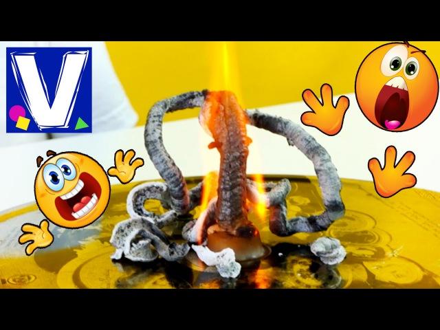 👍 МОНСТР С ЩУПАЛЬЦАМИ Влад испугался Химические опыты Фараонова змея