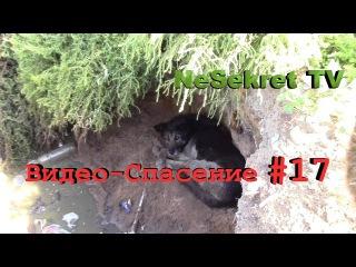 Видео - спасение 17. Достаём собаку из ямы. Город Улан-Удэ.