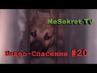 Видео - спасение 20. Спасение собак из узкого проёма между гаражами. Город Улан-У...
