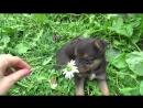 Тайга. Озорная, смелая и очень милая девочка-щенок. Приют Хати