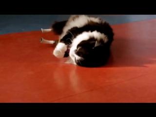Кот Пух с бионическими протезами на задних лапах