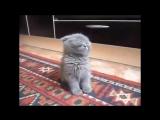 Котёнок засыпает стоя